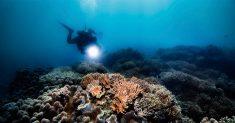 DivingWatch-Underwater